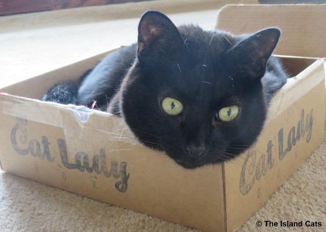 I love this Cat Lady Box
