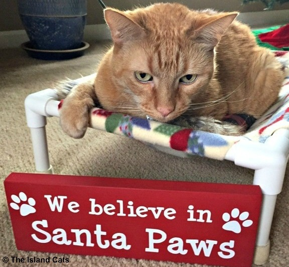 We believe in Santa Paws