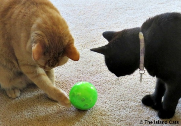 Wally plays with the SlimCat