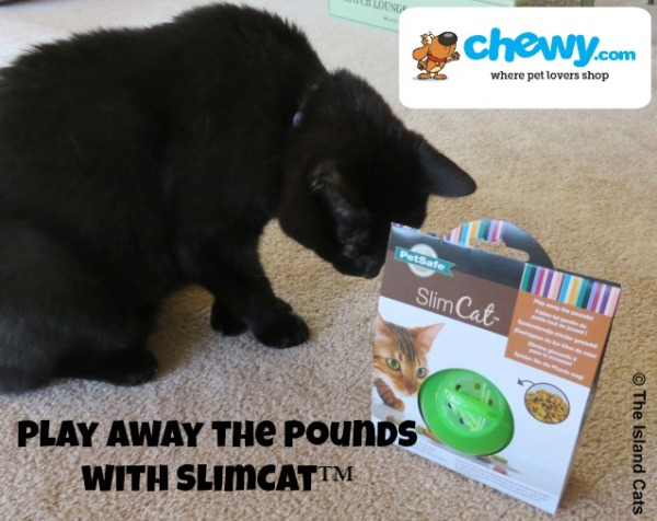 Play away the pounds with SlimCat