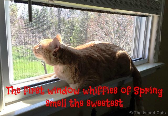 I'm enjoying window whiffies!