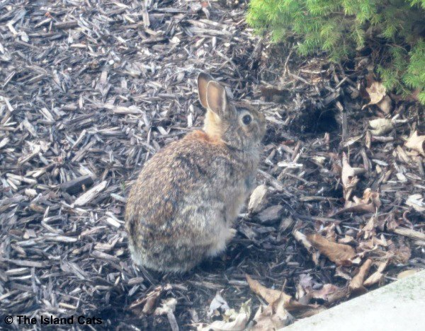 This bunny is good at camouflage