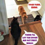 Where's the Air Freshener?