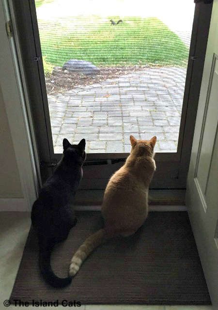 That squirrel is taunting us