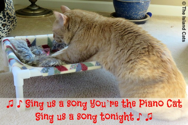 I'm the Piano Cat