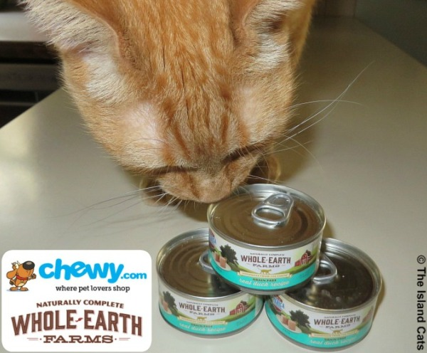 We're test-tasting Whole Earth Farms cat food
