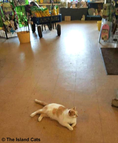 Chip laying in the middle of the store
