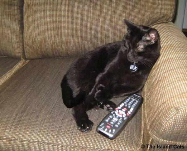 I'm watching TV