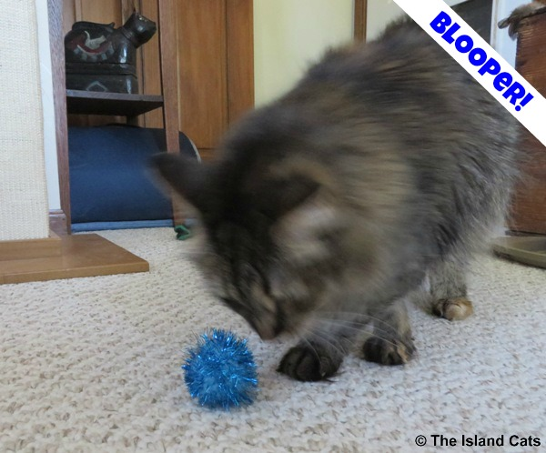 I'm all blurry! #PetBloggerBloopers