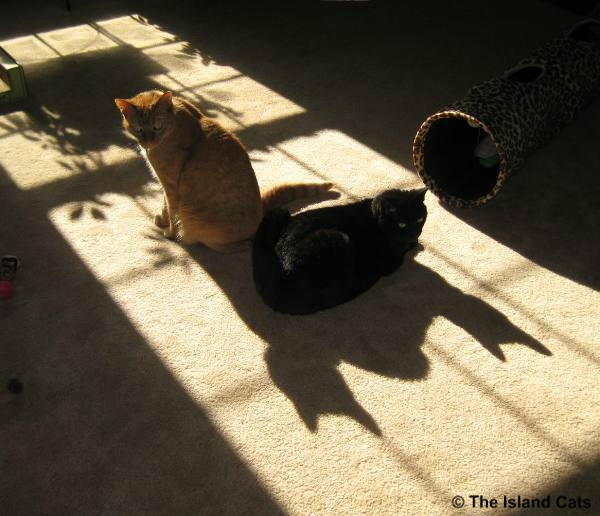 We're about to be attacked by a two-headed batcat
