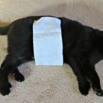 Even Cats Need a Quick Bath® Sometimes
