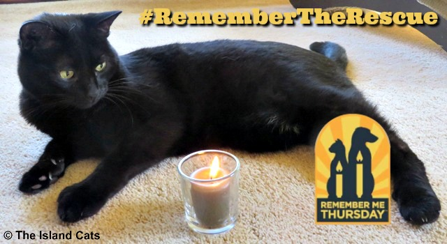 Ernie #RememberMeThursday #RememberTheRescue