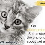 Let's Light Up the World for Orphan Pets #RememberMeThursday