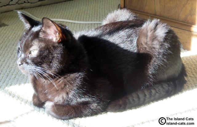 Ernie enjoying the sunshine
