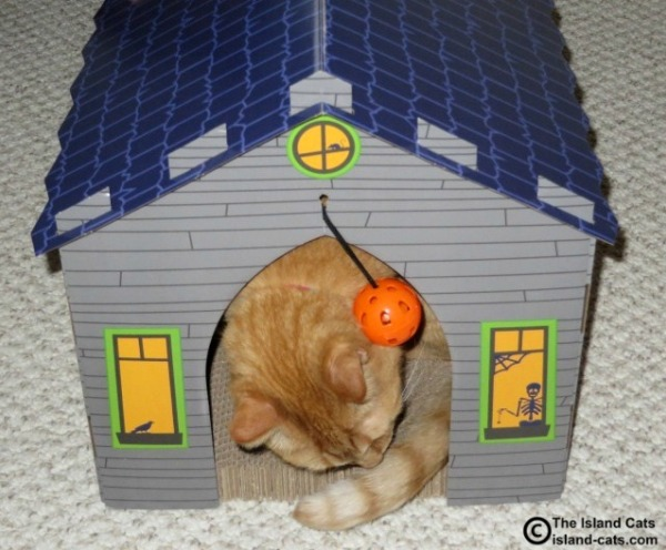 Wally is checking out the haunted house