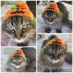 I'm Not a PumpkinHead! #PetBloggerBloopers