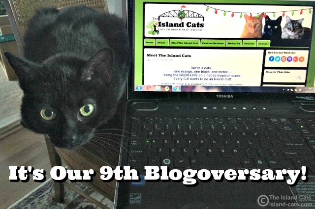 Happy Blogoversary to Us!
