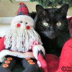 Easy E's Fake Santa Paws Selfie Sunday