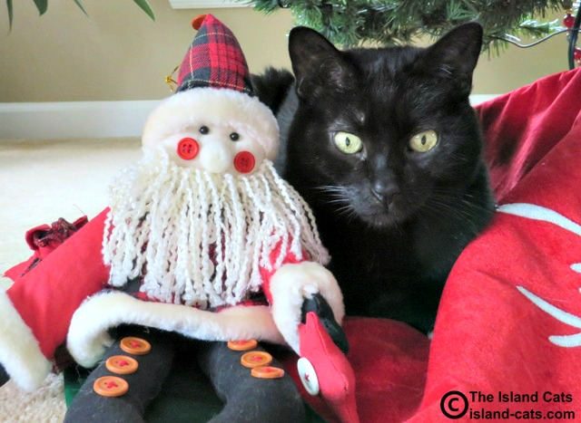 This ain't the real Santa Paws