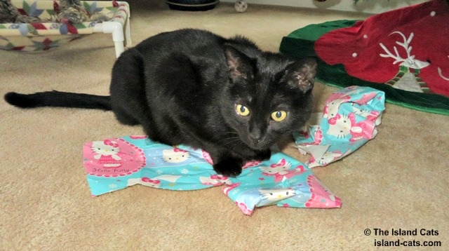 I like playing with the wrapping paper