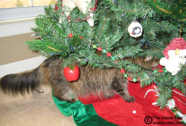 I'm checking out the tree
