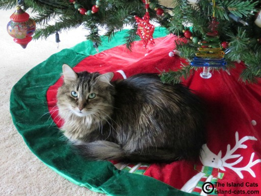 I still like napping under the Christmas tree