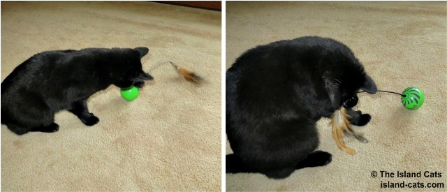 Ernie playing with Feather Whirl