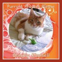 Sammy Kimmel