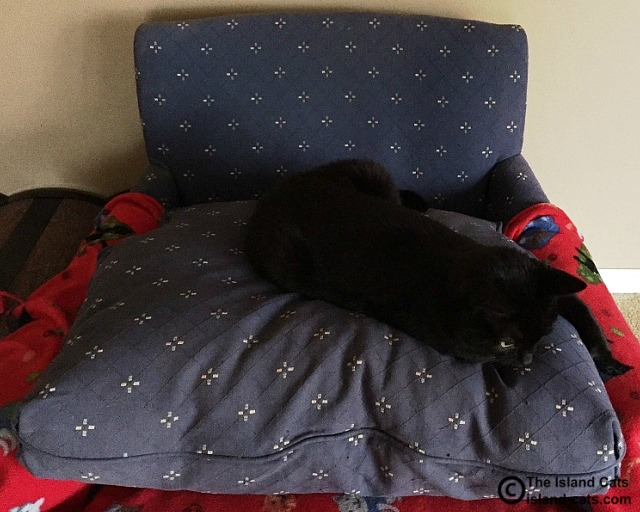 The cushion is better this way