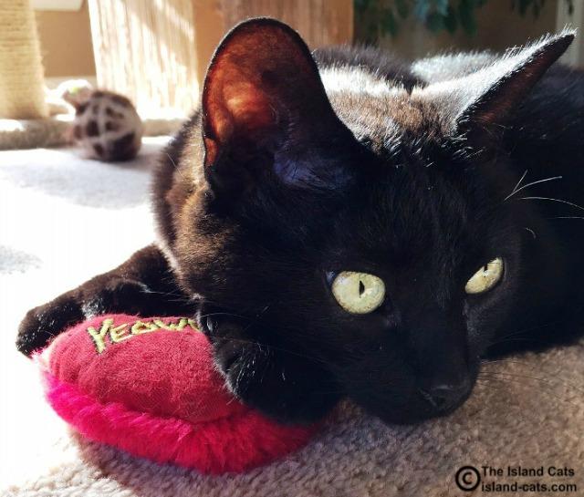 Ernie with Yeowww catnip heart
