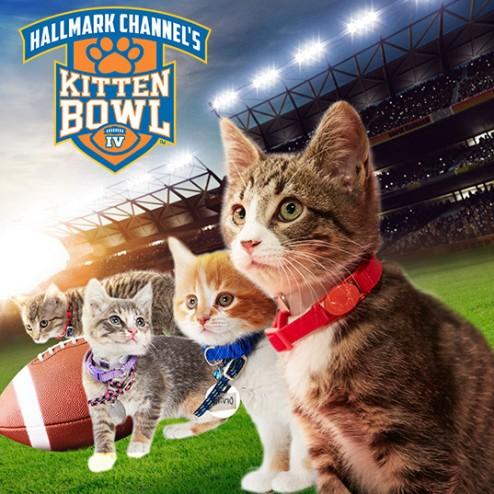 Hallmark's 4th Annual Kitten Bowl