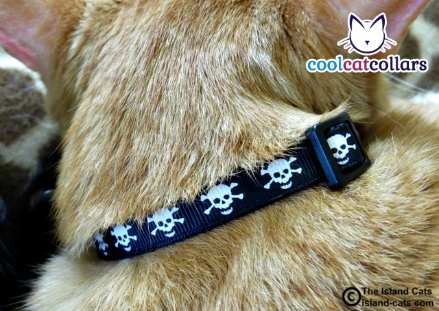 Skull and Crossbones Cool Cat Collar