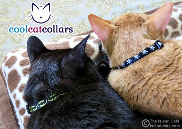 We're wearing Cool Cat Collars