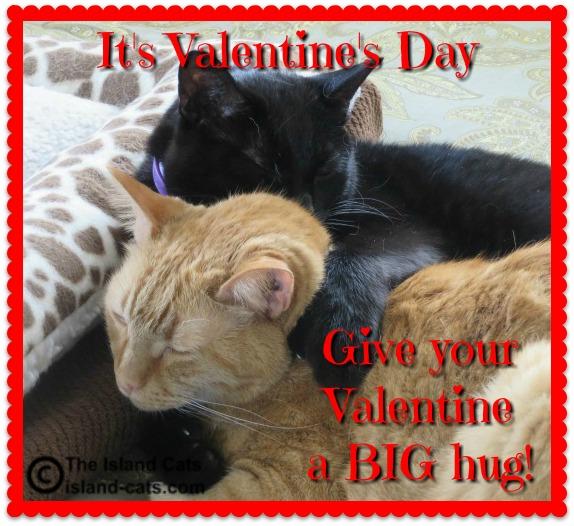Hug your Valentine