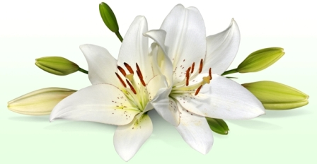 Lilies are VERY poisonous to cats