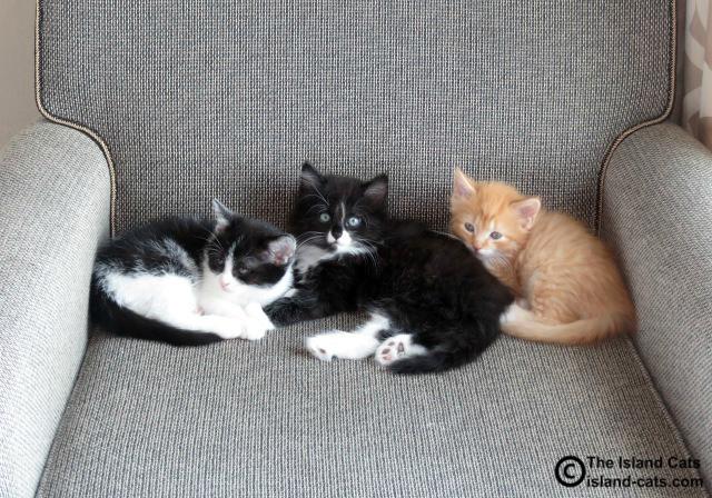 Kittens at BlogPaws