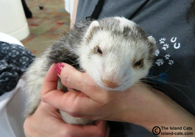 Snotface the Ferret
