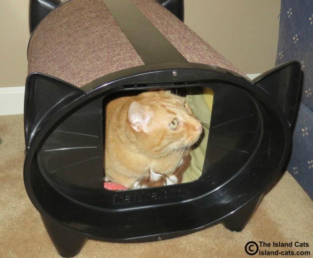 I hope Ernie doesn't find me in here
