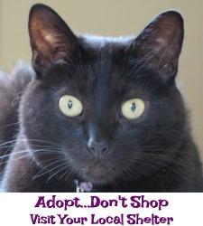 Adopt...Don't Shop