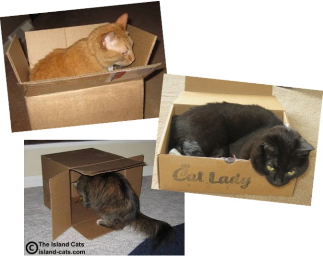 Island Cats in boxes