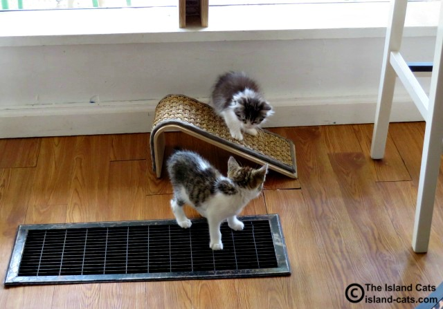 These kittens were ready to play