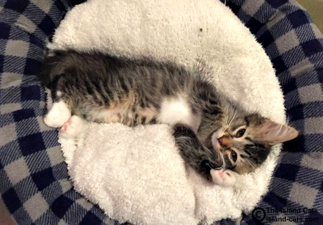 This kitten is working the cute factor