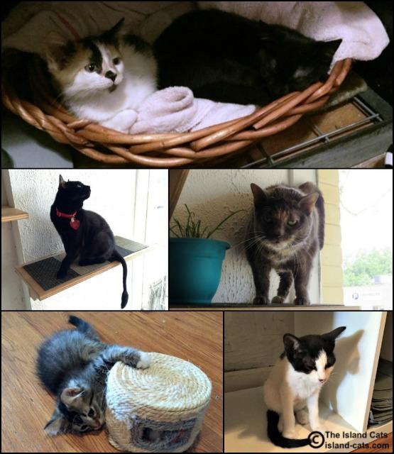 Ferndale Cat Cafe cats