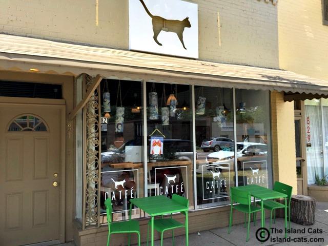 Ferndale Cat Cafe