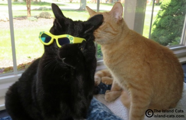 Get these sunglasses offa me!