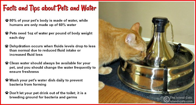 Facts and Tips about Pets and Water