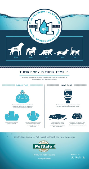 Pet Hydration Month Graphic