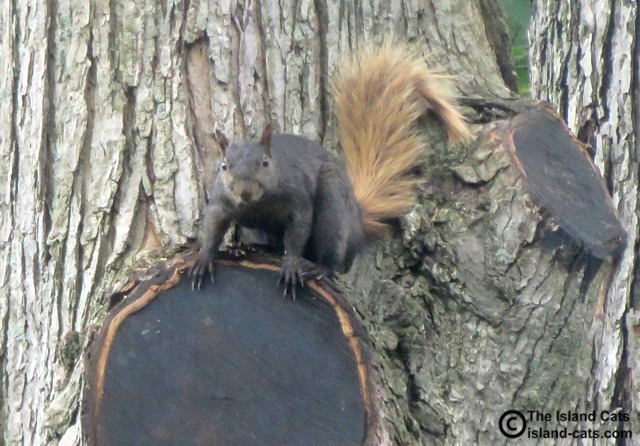 Is that a smile on that squirrel?