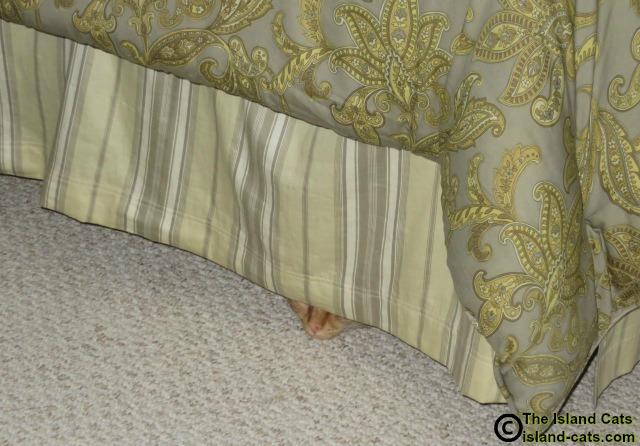Wally thinks he's hiding