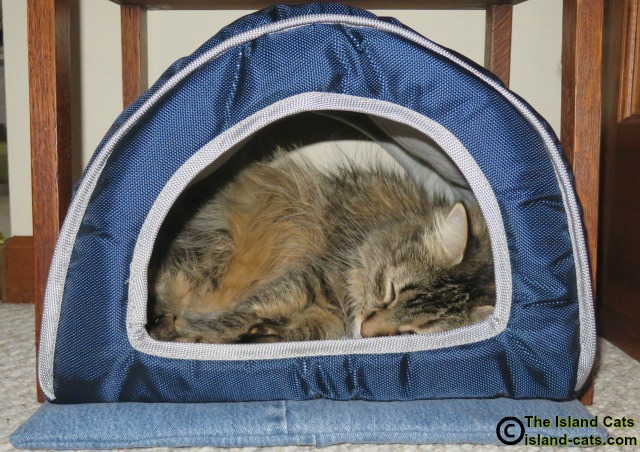 Zoey snoozing in her cabana